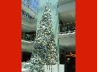 Bild Weihnachtsommer03.jpg anzeigen.