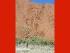 Bild Outbacktour14.jpg anzeigen.