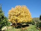Bild Herbst04.jpg anzeigen.