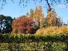 Bild Herbst05.jpg anzeigen.