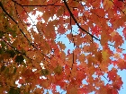Bild Herbst06.jpg anzeigen.